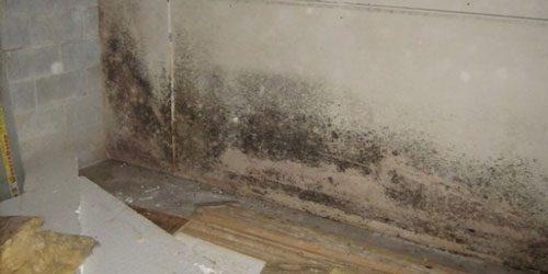 Comment retirer les traces de moisissures ?
